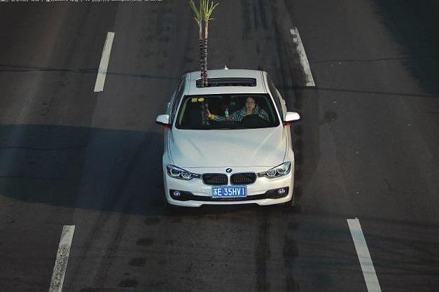 """日前,张家港交警在视频监控中进行电子巡逻时,发现在346国道上,一辆行驶中的宝马轿车车顶,居然长出了两根长""""竹子""""。  通讯员朱丽艳摄"""